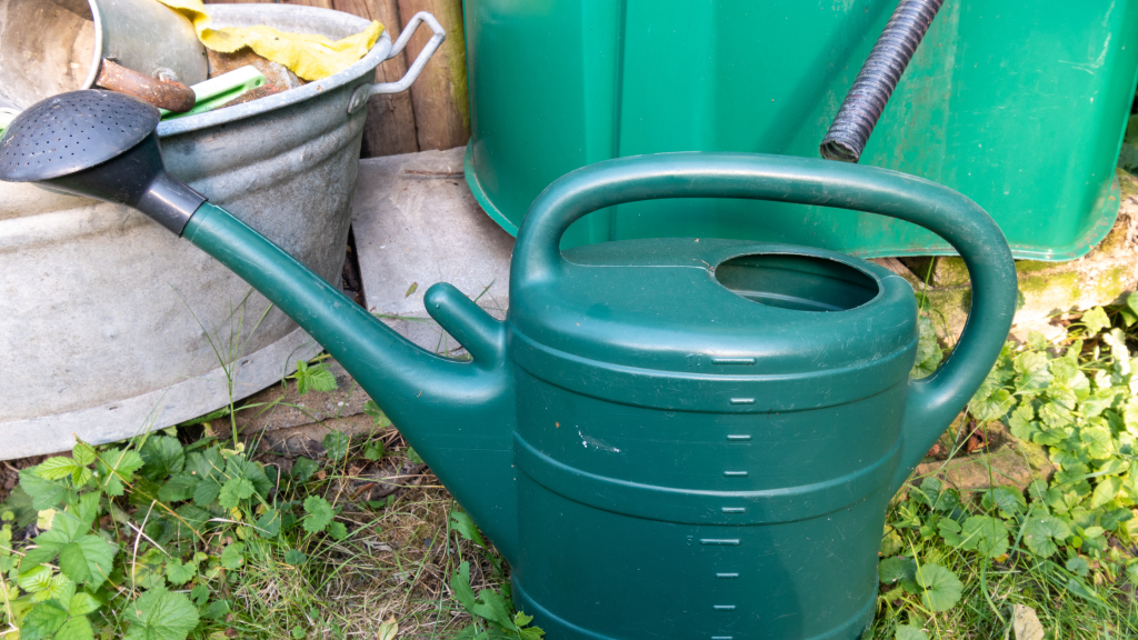 harvested rain water in watering can
